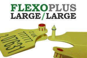 flexo-large-large2